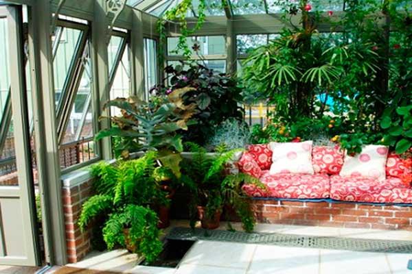 цветы-в-квартире-(3)